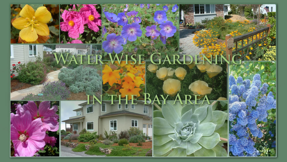 Water Wise Gardening In The San Francisco Bay Area